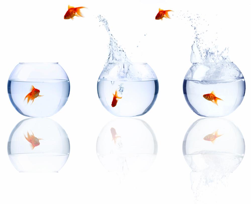 Generating Momentum In Organisational Change